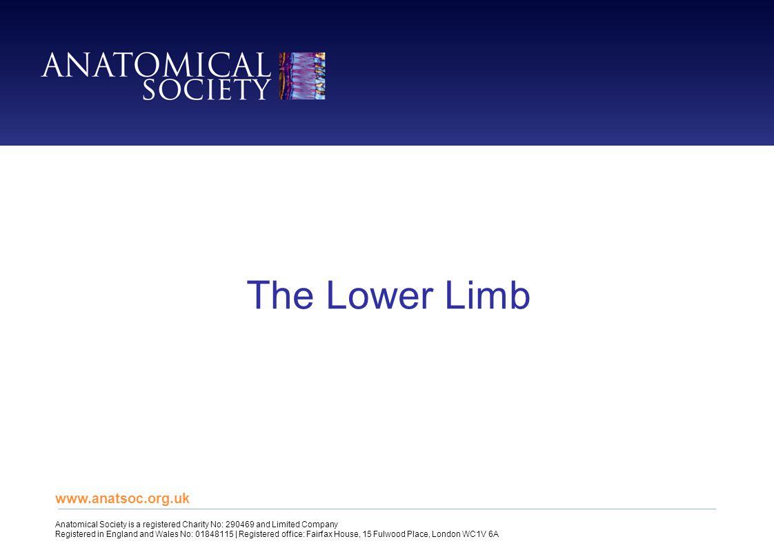 The Lower Limb www.anatsoc.org.uk