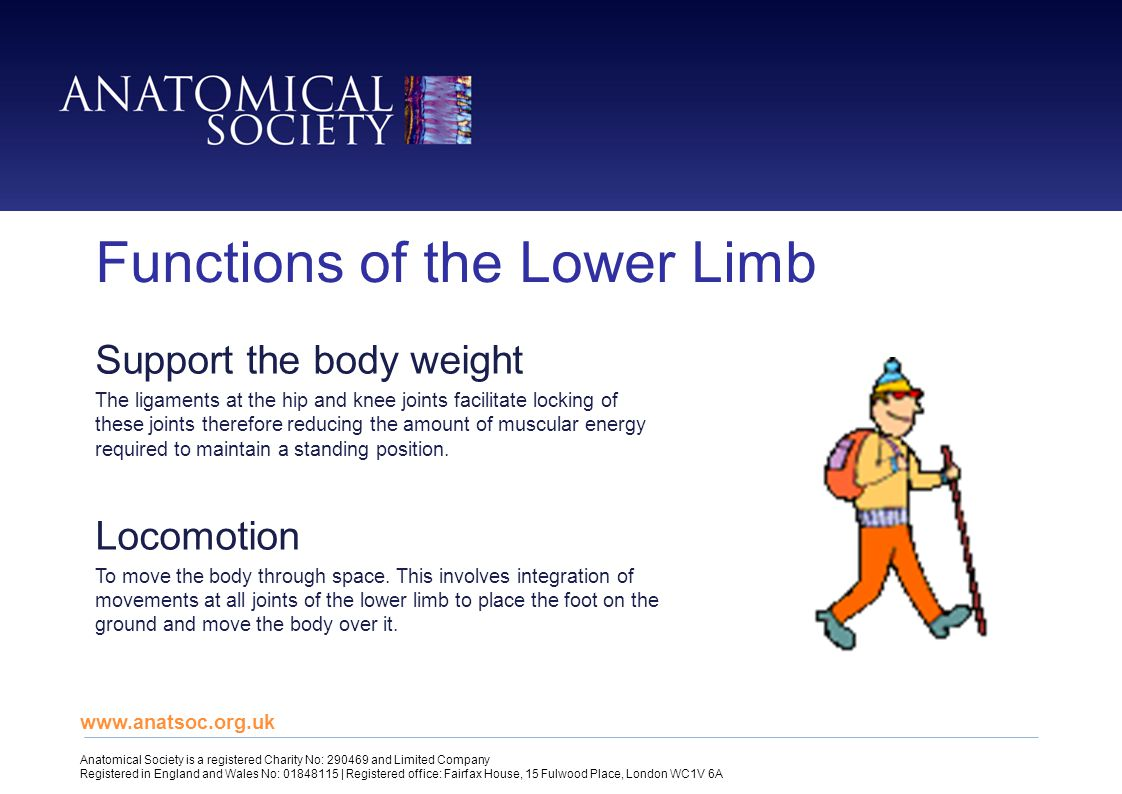 Functions of the Lower Limb