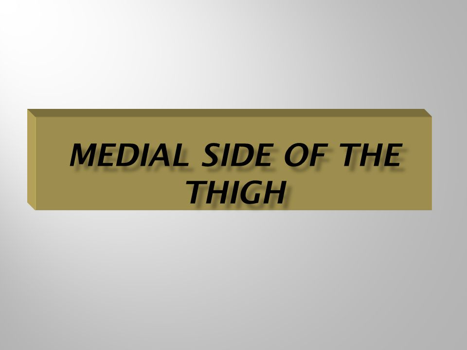 Medial Side Of The Thigh
