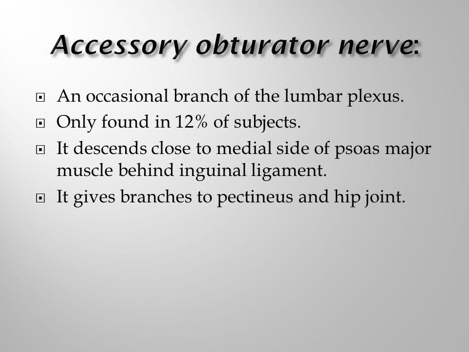 Accessory obturator nerve:
