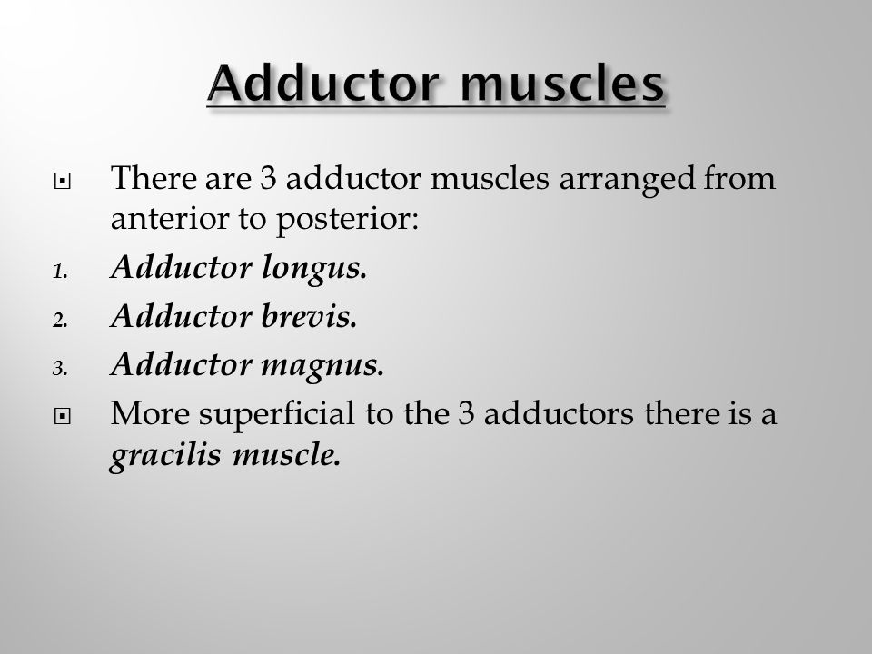 Adductor muscles There are 3 adductor muscles arranged from anterior to posterior: Adductor longus.