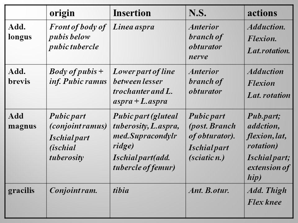 origin Insertion N.S. actions Add. longus
