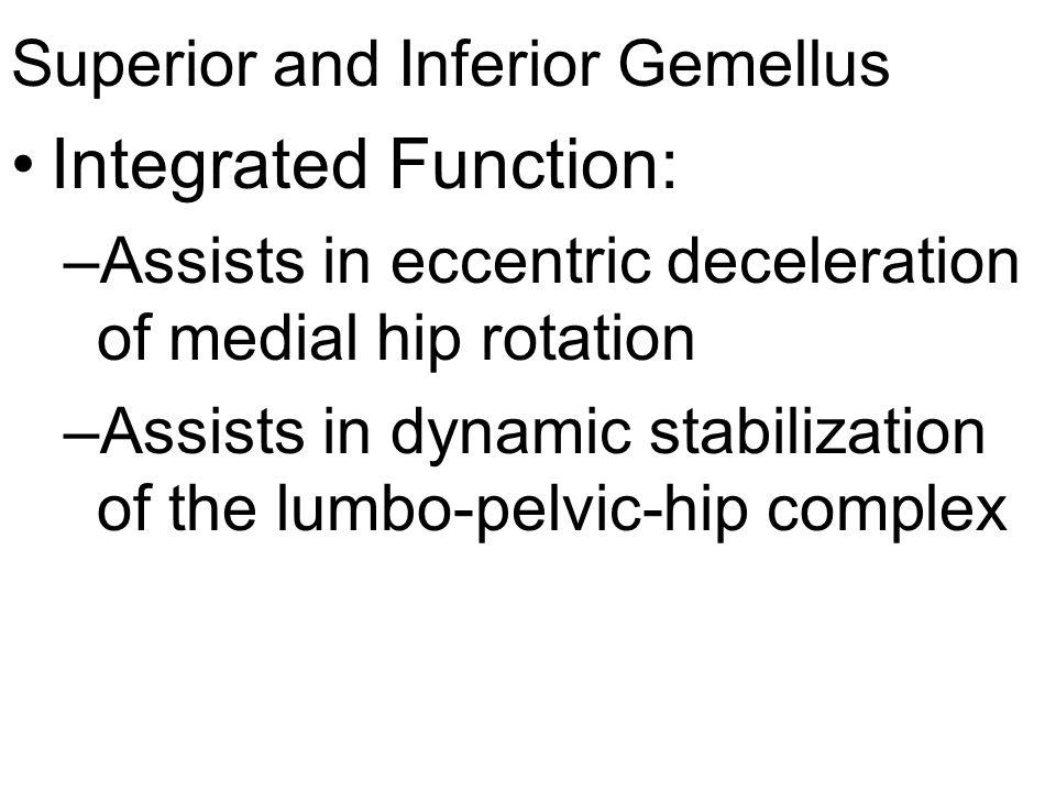 Superior and Inferior Gemellus