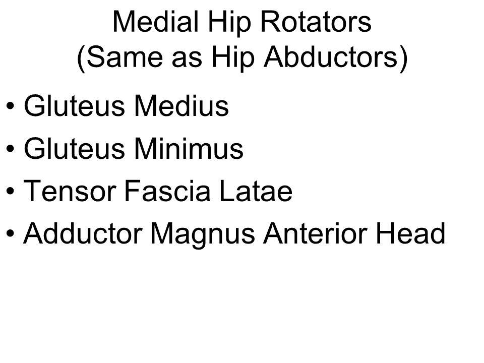 Medial Hip Rotators (Same as Hip Abductors)