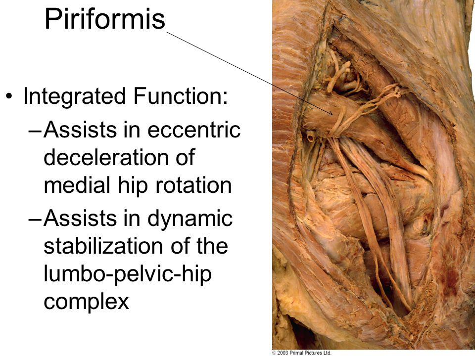 Piriformis Integrated Function: