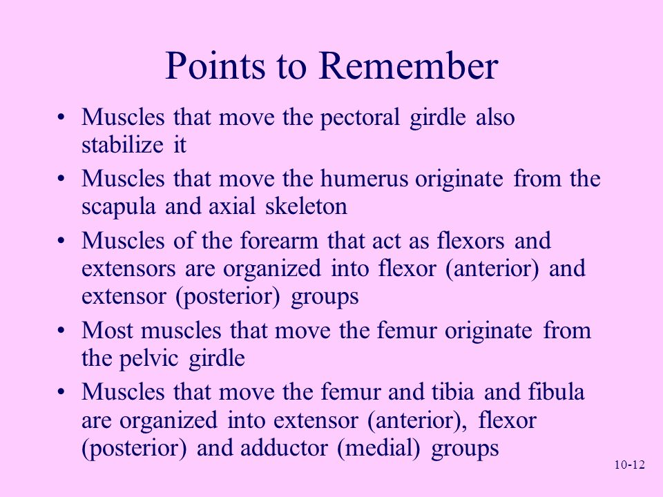 Points to Remember Muscles that move the pectoral girdle also stabilize it.