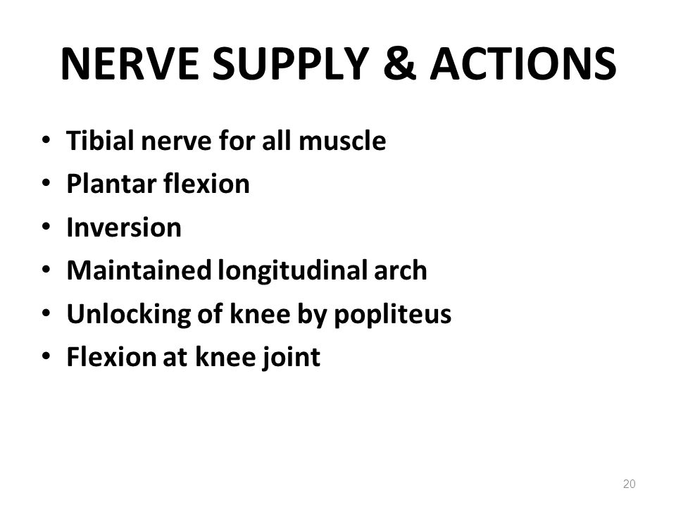 NERVE SUPPLY & ACTIONS Tibial nerve for all muscle Plantar flexion