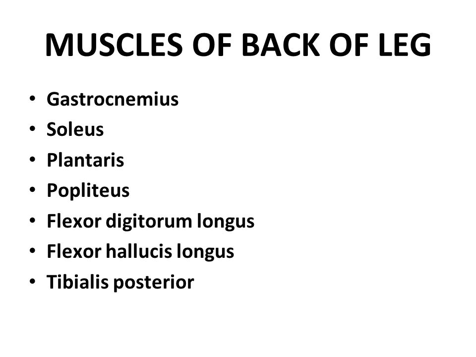 MUSCLES OF BACK OF LEG Gastrocnemius Soleus Plantaris Popliteus