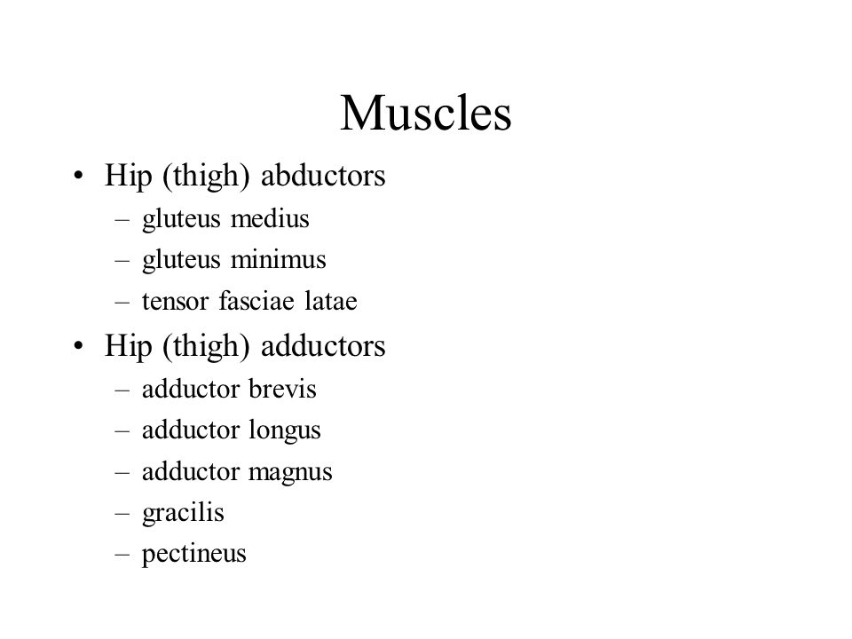 Muscles Hip (thigh) abductors Hip (thigh) adductors gluteus medius