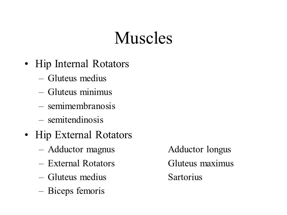 Muscles Hip Internal Rotators Hip External Rotators Gluteus medius