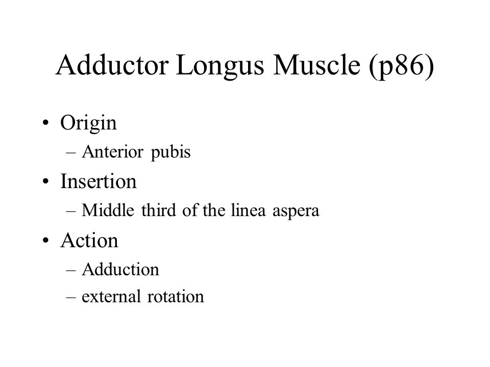 Adductor Longus Muscle (p86)