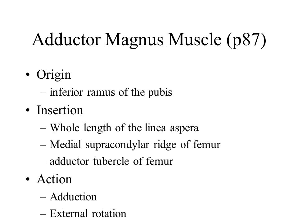 Adductor Magnus Muscle (p87)
