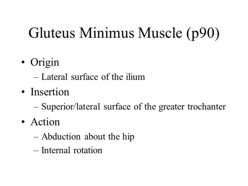 Gluteus Minimus Muscle (p90)