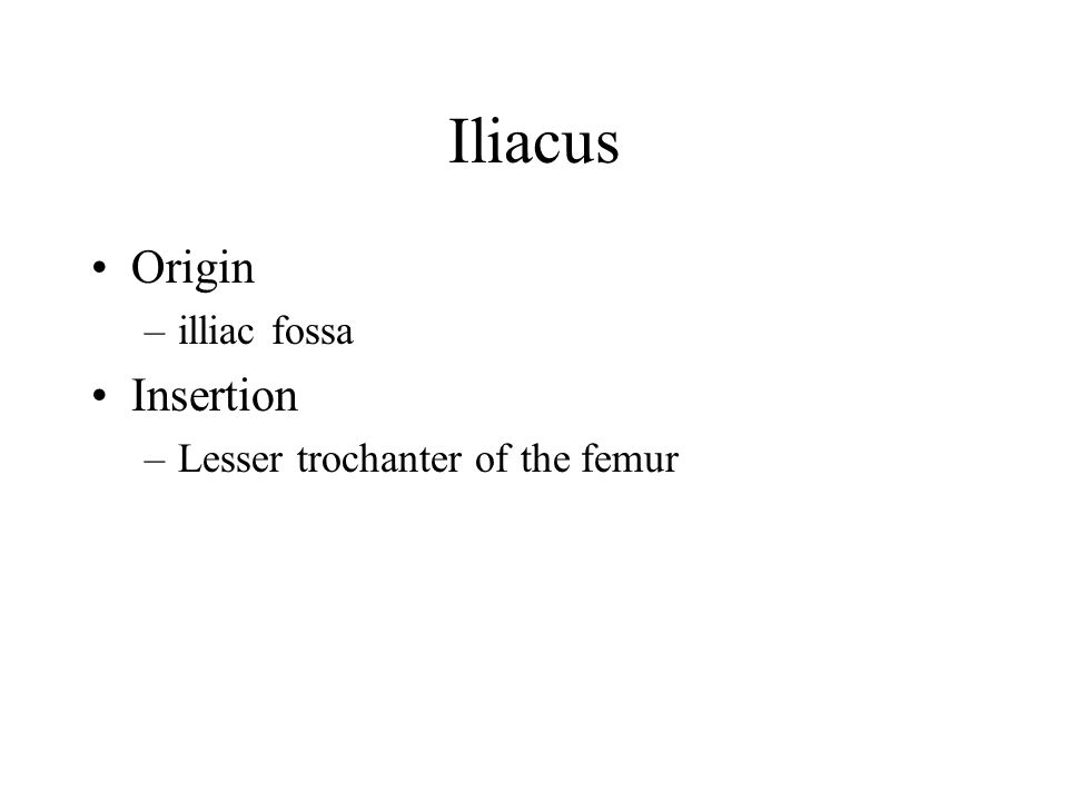 Iliacus Origin illiac fossa Insertion Lesser trochanter of the femur