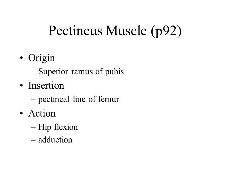 Pectineus Muscle (p92) Origin Insertion Action Superior ramus of pubis