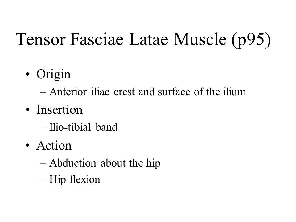 Tensor Fasciae Latae Muscle (p95)