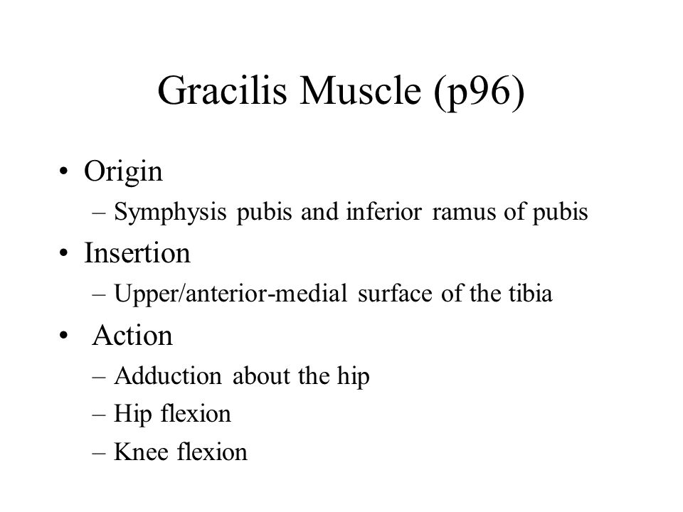 Gracilis Muscle (p96) Origin Insertion Action