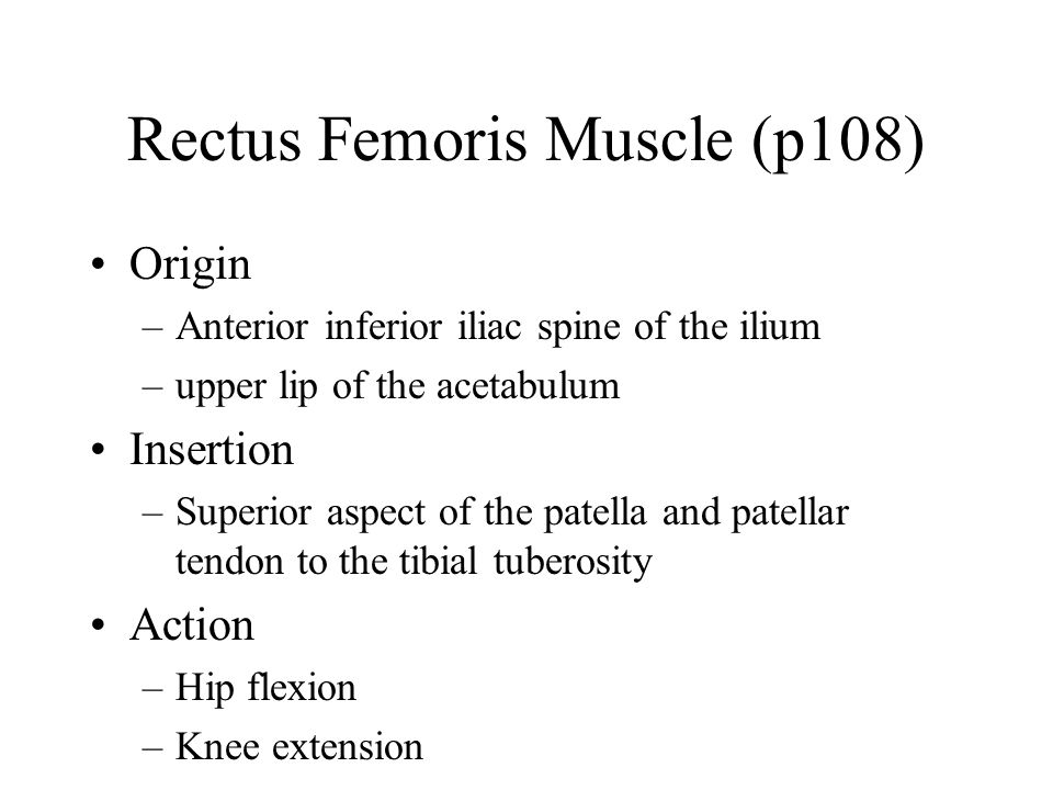Rectus Femoris Muscle (p108)