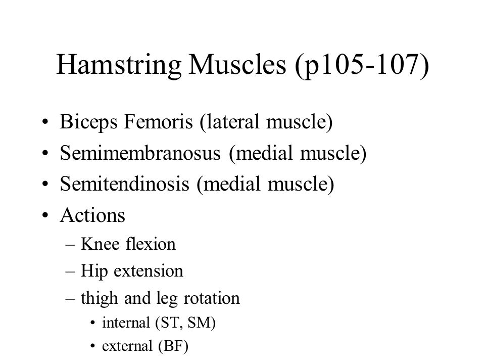 Hamstring Muscles (p105-107)