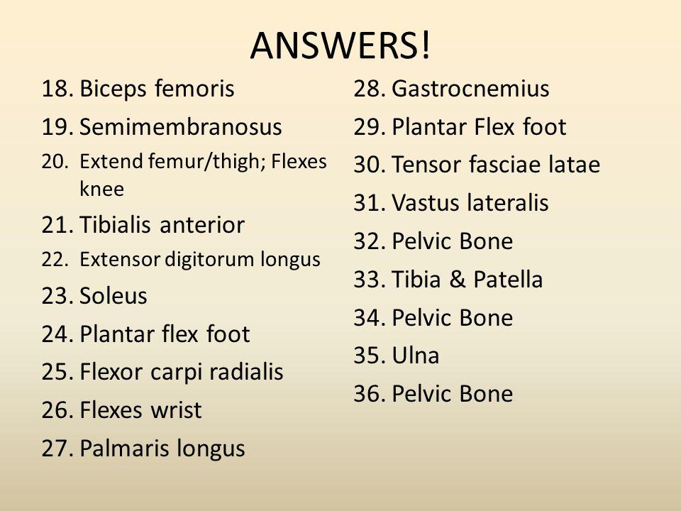 ANSWERS! Biceps femoris Semimembranosus Tibialis anterior Soleus