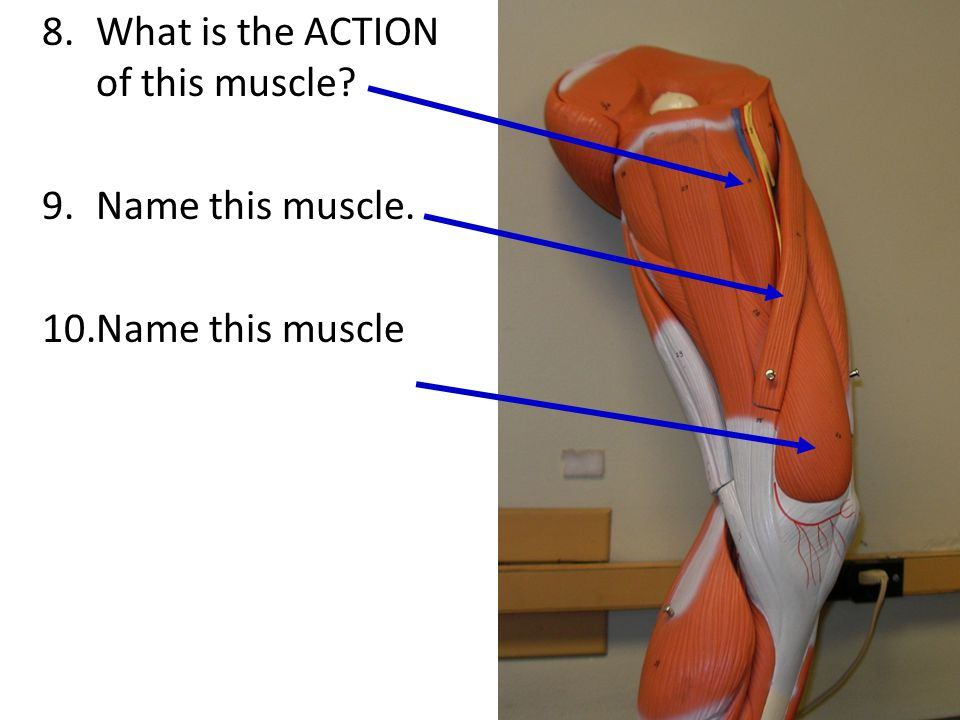 What is the ACTION of this muscle