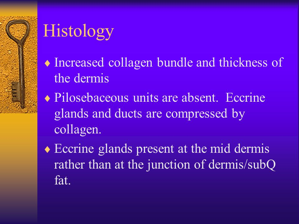 Histology Increased collagen bundle and thickness of the dermis