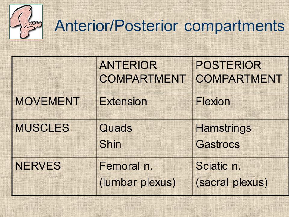 Anterior/Posterior compartments
