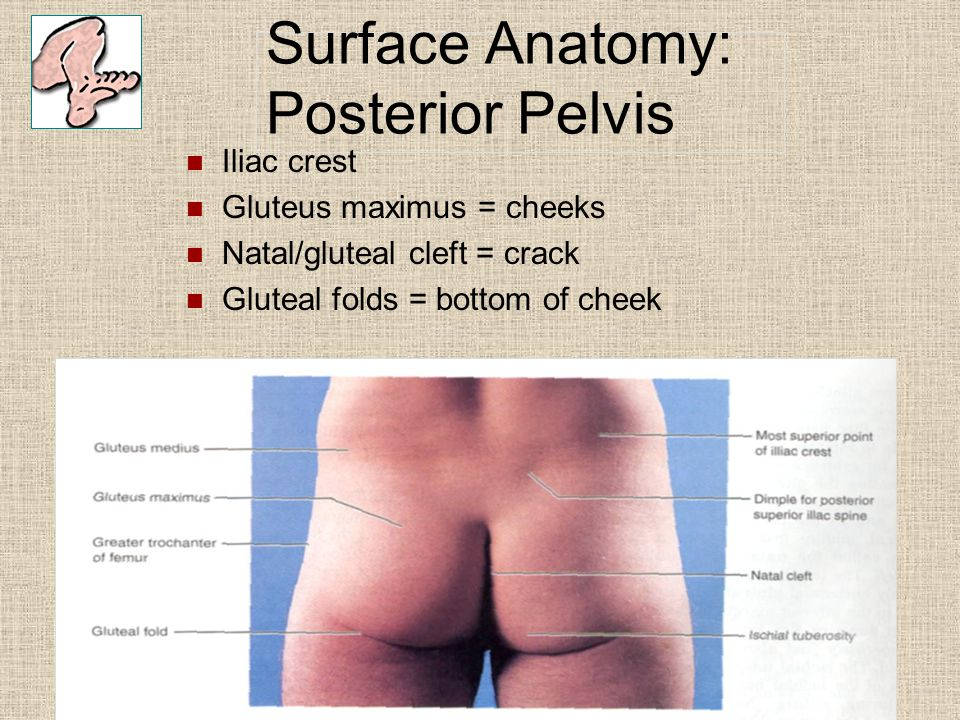 Surface Anatomy: Posterior Pelvis