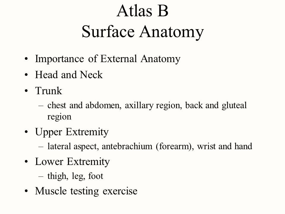 Atlas B Surface Anatomy
