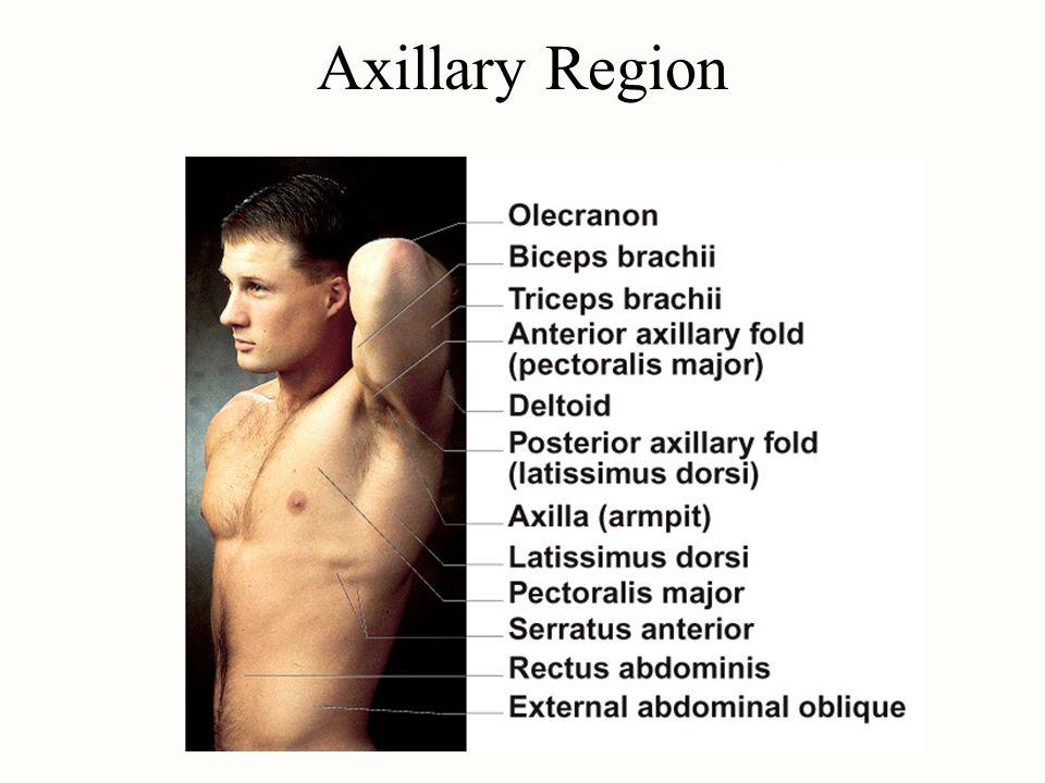 Axillary Region