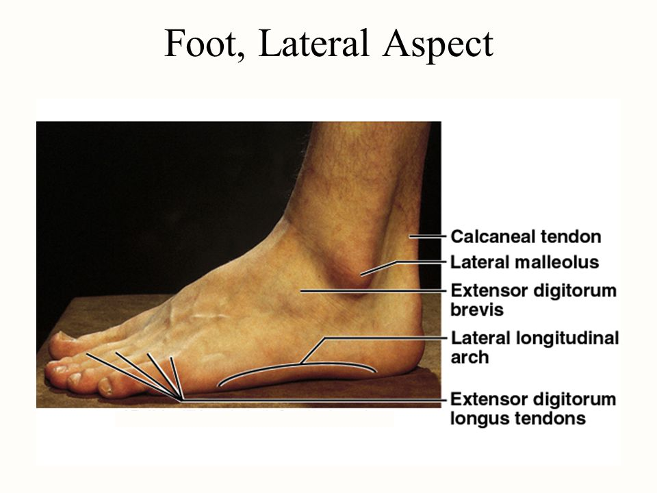 Foot, Lateral Aspect