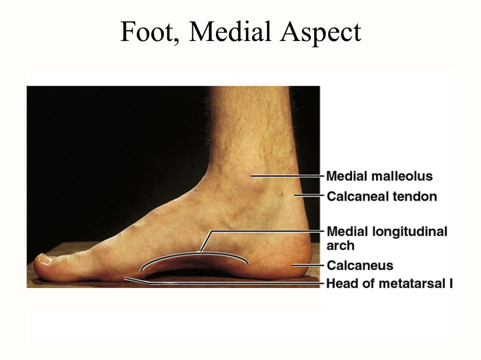 Foot, Medial Aspect