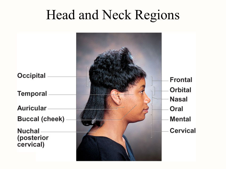 Head and Neck Regions