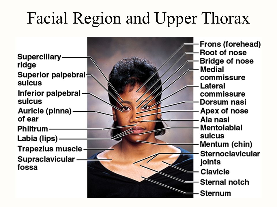 Facial Region and Upper Thorax