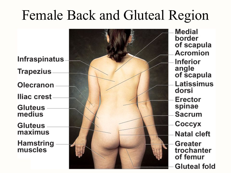 Female Back and Gluteal Region