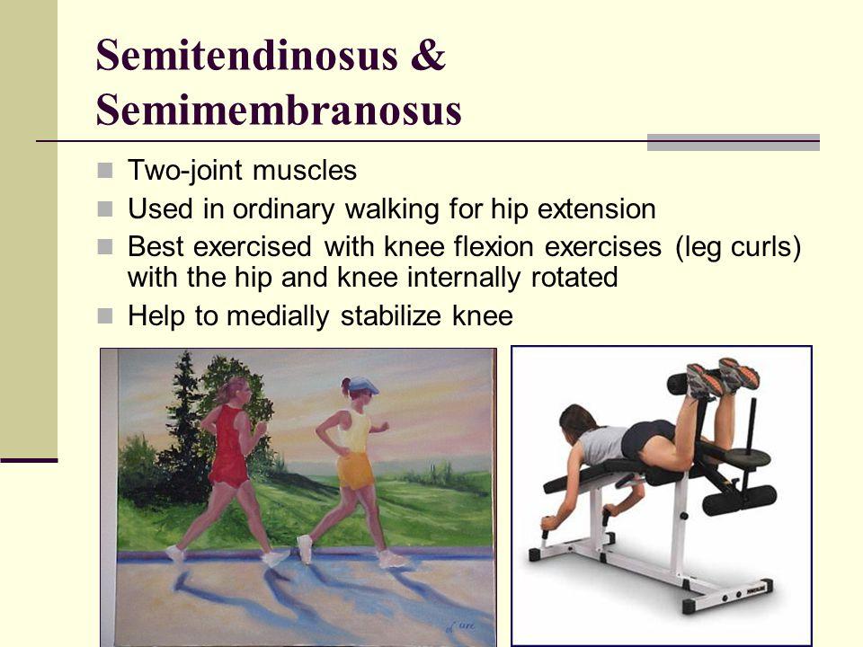 Semitendinosus & Semimembranosus