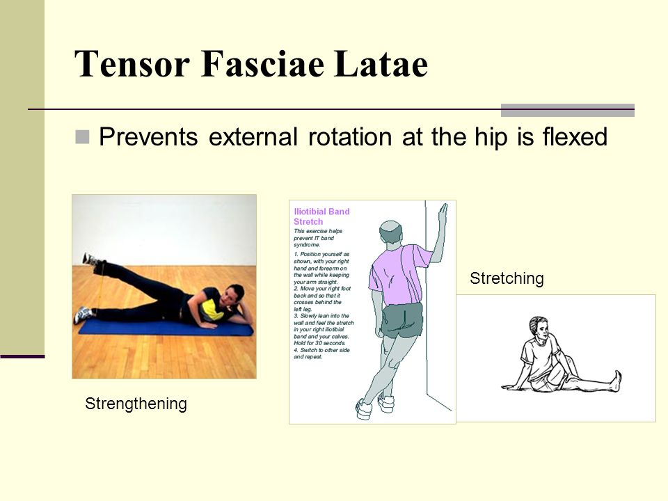 Tensor Fasciae Latae Prevents external rotation at the hip is flexed