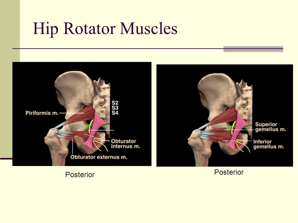 Hip Rotator Muscles Posterior Posterior