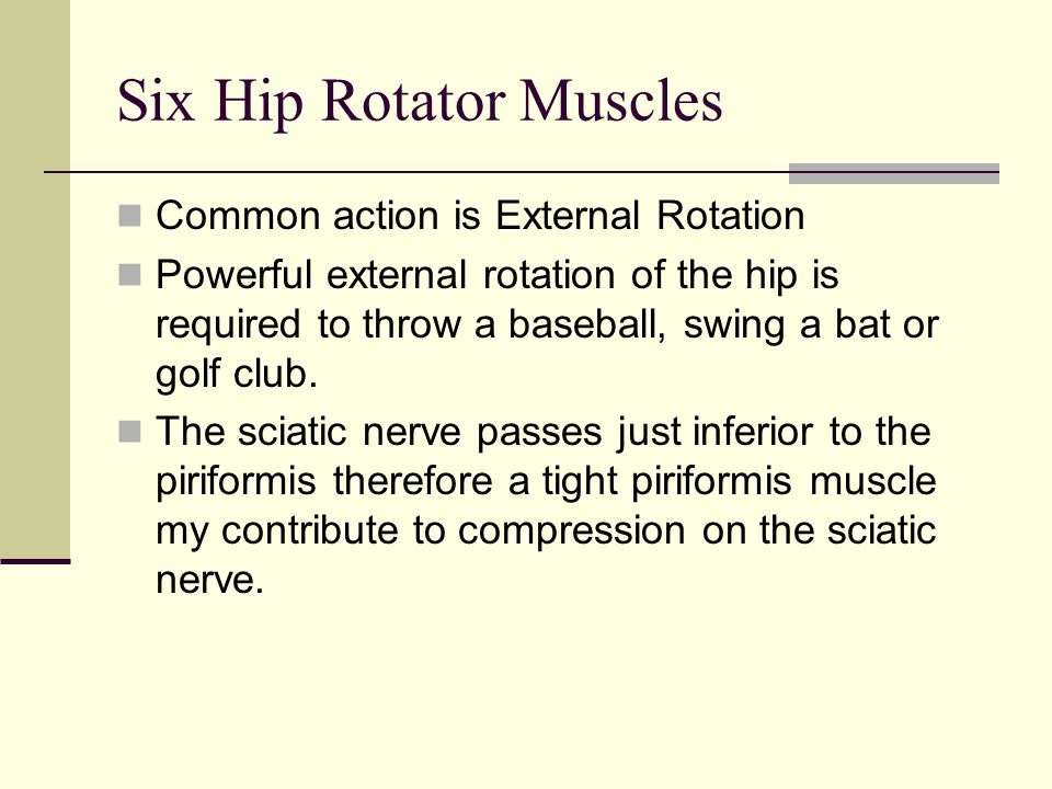 Six Hip Rotator Muscles