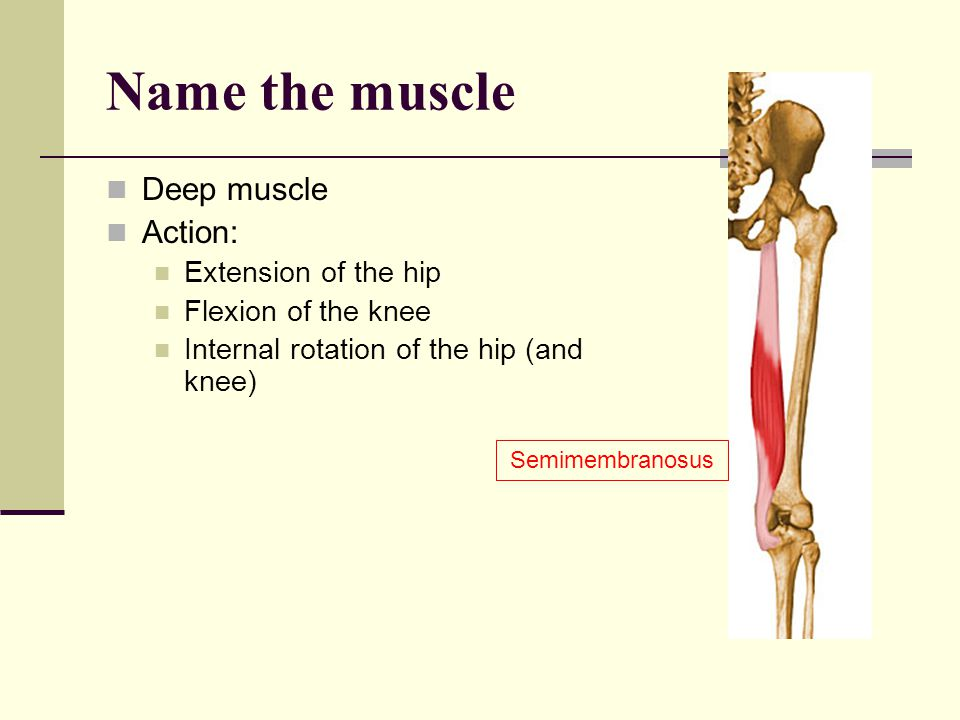 Name the muscle Deep muscle Action: Extension of the hip