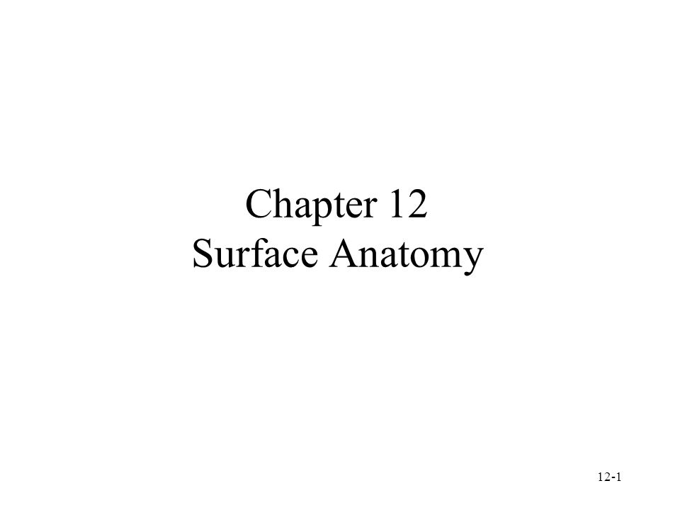 Chapter 12 Surface Anatomy
