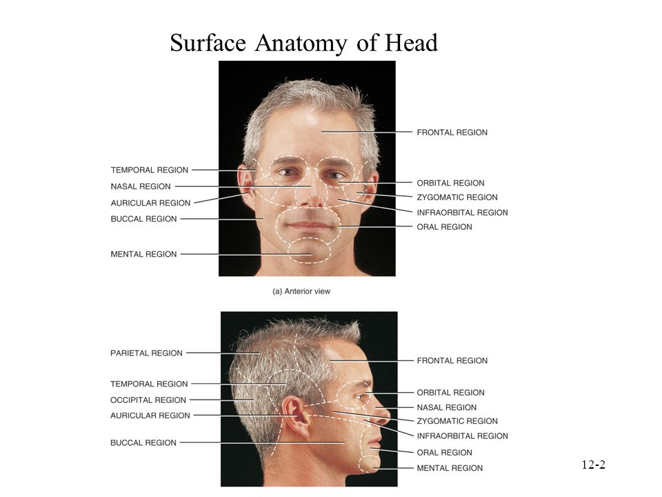 Surface Anatomy of Head