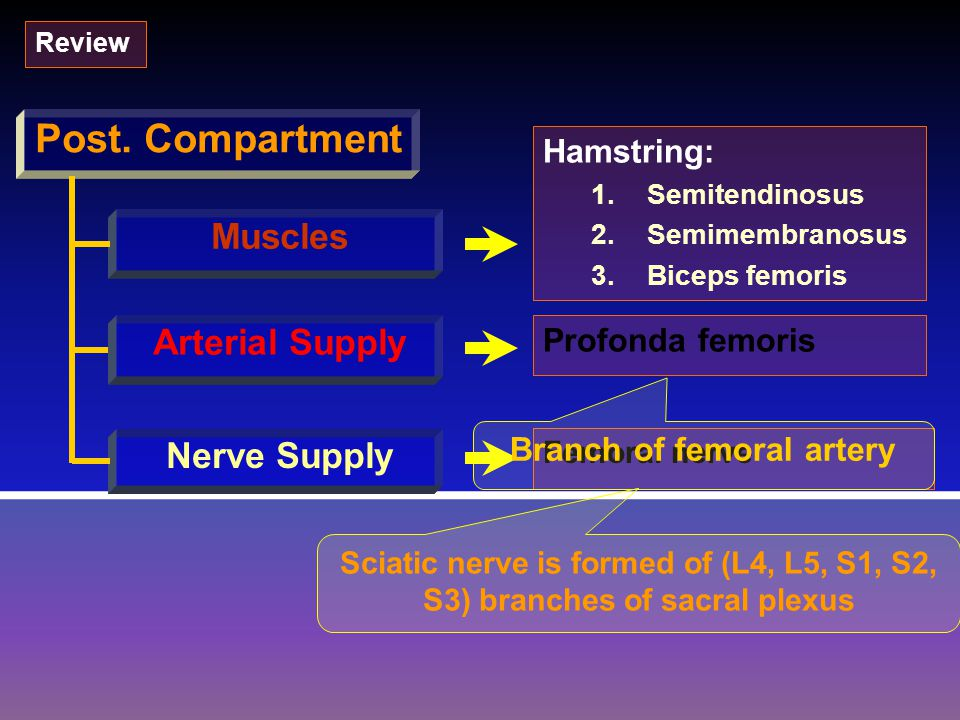 Branch of femoral artery