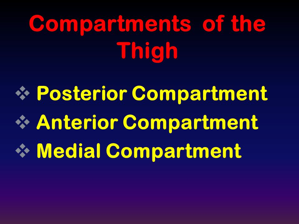Compartments of the Thigh