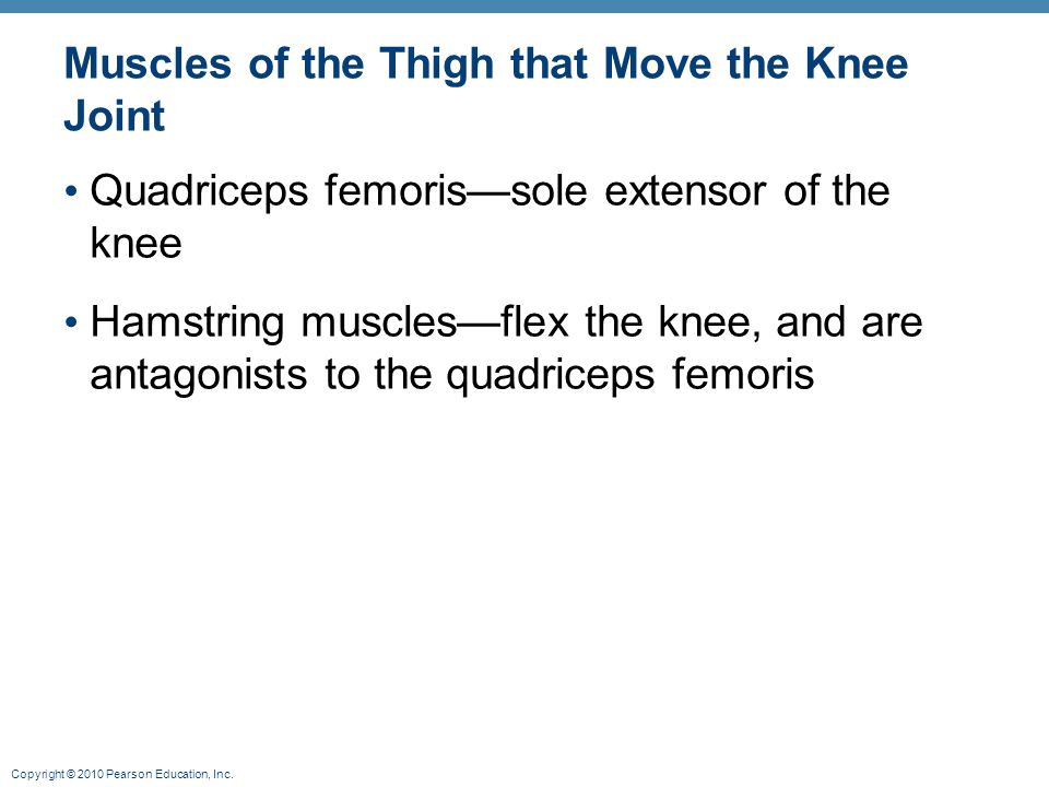 Muscles of the Thigh that Move the Knee Joint