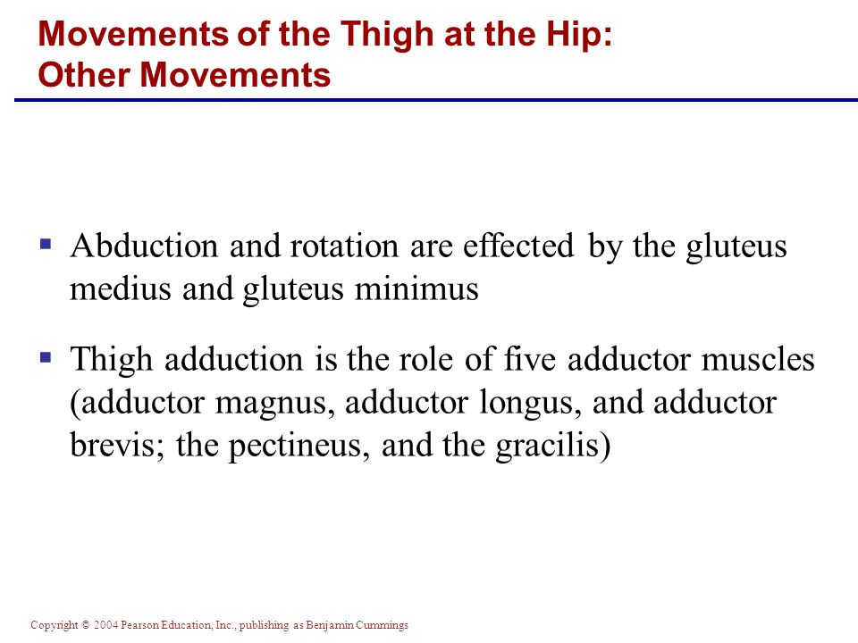 Movements of the Thigh at the Hip: Other Movements