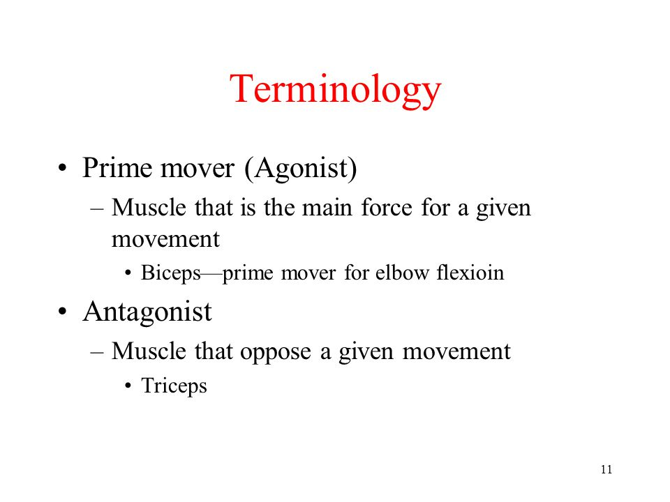 Terminology Prime mover (Agonist) Antagonist