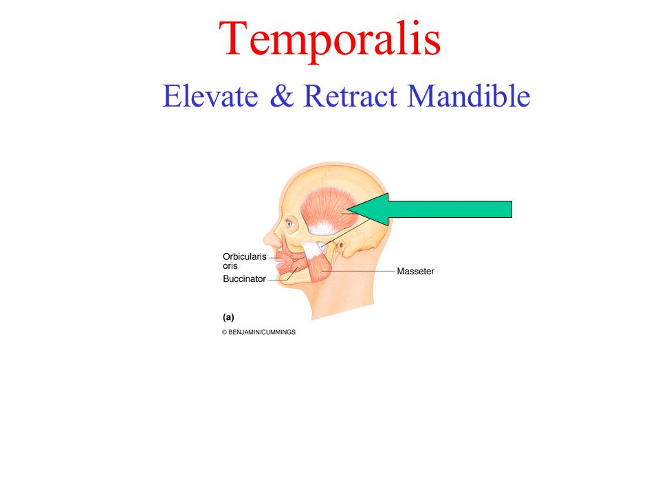 Elevate & Retract Mandible