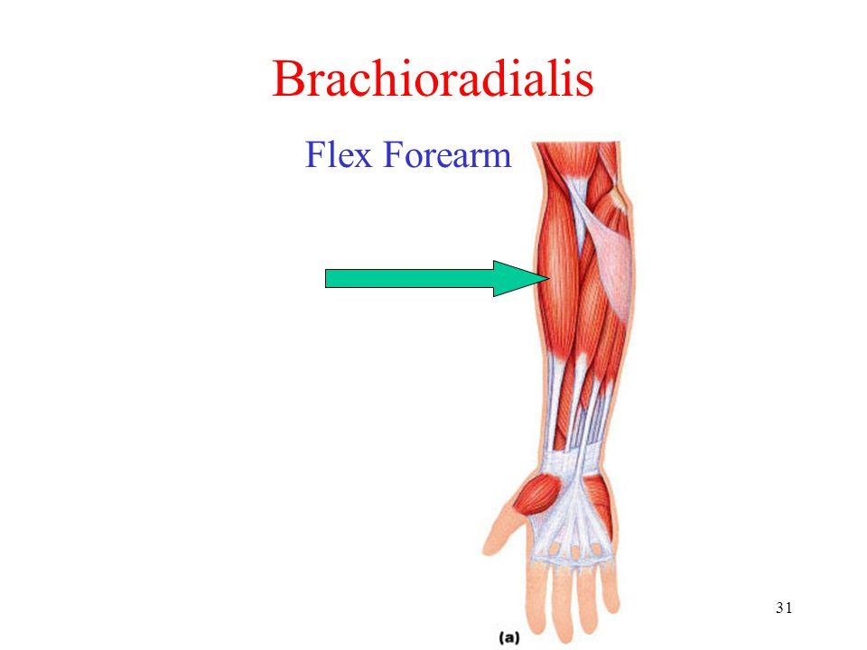 Brachioradialis Flex Forearm