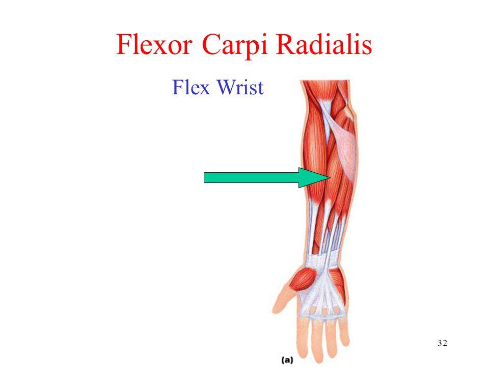Flexor Carpi Radialis Flex Wrist